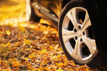 car autumn
